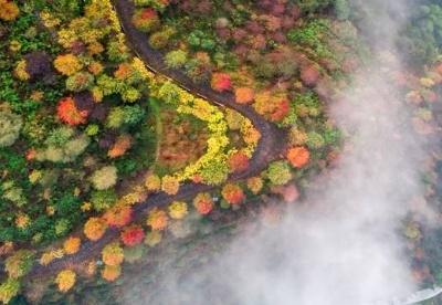 【探寻川渝文化】来彩色森林感受童话中的色彩
